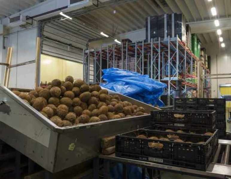 Coconut: from bulk to retail packaging